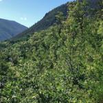 AJAX Trail