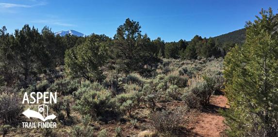Lorax Trail