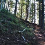 Hell Roaring Trail