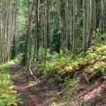 Congo Trail