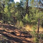 Faerie Trail