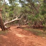 Skeeter's Ridge Trail