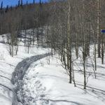 Babbish Trail