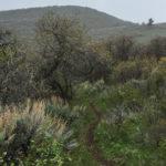 Skull Bucket Trail