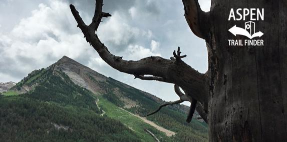 Legend of Tall Tree Trail