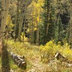 Dexter Park Trail