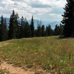 Nature Trail Aspen