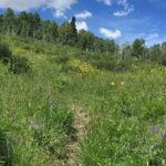 Dinkle Lake Trail