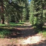 Lenado Trail
