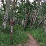 Raggeds Trail