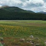 Sellar Meadow