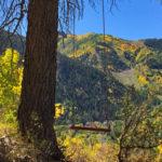 Aspen Swing Project